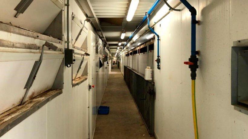 Imagen 2. El uso de pediluvios a la entrada de las salas de maternidad, así como las medidas generales de limpieza y orden en la granja, son importantes para minimizar la presión de infección.