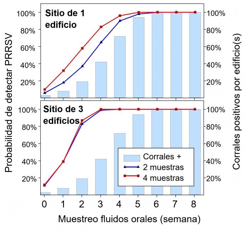 Figura 1. Detección de PRRSV usando muestreo fijo espacial. Probabilidad de detectar ≥ 1 muestra positiva a PRRSV como función del número de muestras tomadas por nave(2 o 4) y el número de corrales muestreados por granja (1 o 3). Nota que la probabilidad de detección incrementa geométricamente con el número de cuerdas y naves muestreadas. Datos de Rotolo et al., (2017).