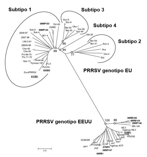 Imagen 1. Relación filogenética de virus PRRS, secuencias ORF 5 que ilustran la diferencia genética entre PRRSV tipo 1 (genotipo EU) y PRRSV tipo 2 (genotipo EEUU). Fuente: Amonsin, A., Kedkovid, R., Puranaveja, S.et al. (2009)