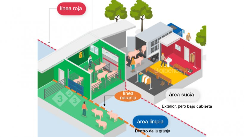 Imagen 1. Cargador diseñado para la carga de cerdos a un camión. Se ha creado una doble línea de separación (línea discontinua roja y naranja) entre las zonas limpias y sucias para mejorar la bioseguridad de este proceso. Imagen cortesía de Bioiberica.