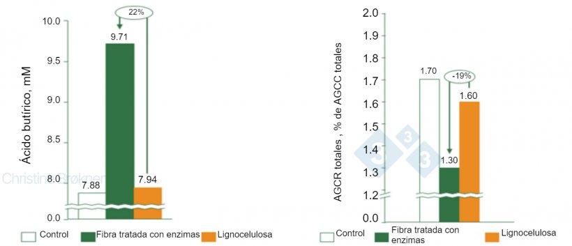 Figura 1. Control = no fibra, Fibra tratada con enzimas = PNA soluble, Lignocelulosa= PNA insoluble.(A) La producción de ácido butírico aumenta un 22% en lechones (15 kg) al fermentar fibra soluble. (B) La fermentación de proteínas se reduce un 19% en lechones (15 kg) al fermentar fibra soluble. AGCC = ácidos grasos de cadena corta, AGCR = ácidos grasos de cadena ramificada.