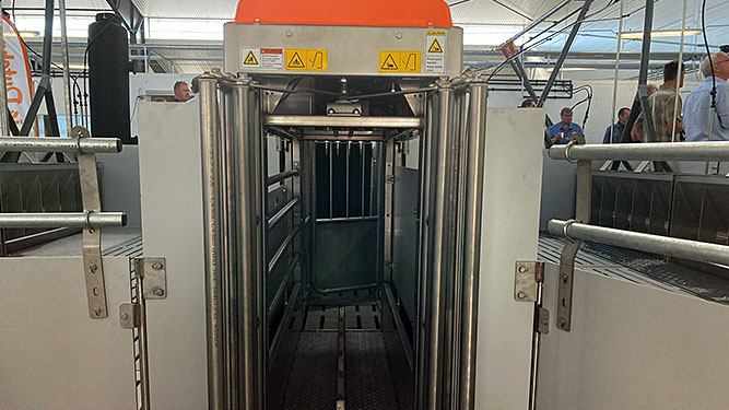La puerta de entrada de TriSort está abierta cuando la báscula está vacía. Cuando un cerdo entra, la puerta se cierra automáticamente a consecuencia del cambio de peso en la báscula y comienza el proceso de pesaje de tres segundos de duración. Después, se abre la puerta automáticamente.