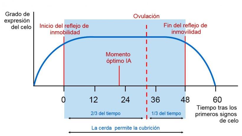 Figura 1. Representación gráfica del reflejo de inmobilidad, la ovulación y el momento óptimo de IA en una cerda con un celo de 60h. Fuente Carles Casanovas.