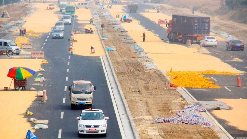 Imagen 1. Agricultores chinos secando maíz en el asfalto caliente. Fuente : Chén fēi/CFP,News163