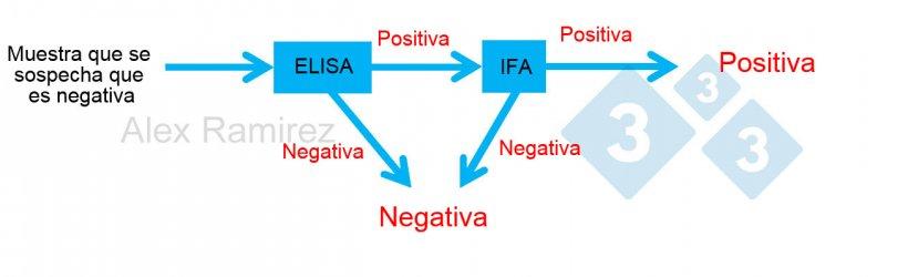 Diagrama que muestra el uso de PRRS IFA como prueba confirmatoria para muestras que salen inesperadamente positivas a PRRS mediante ELISA. Una muestra de la que se sospecha que es negativa y sale negativa a ELISA se considera negativa. Si esta muestra da positiva inesperadamente, se puede realizar una IFA de PRRS como prueba de confirmación. Si la prueba IFA es positiva, se confirma que la muestra es positiva. Si la prueba de IFA es negativa, asumiremos que fue un falso positivo siempre que la PCR también sea negativa para confirmar que no hay infección reciente.