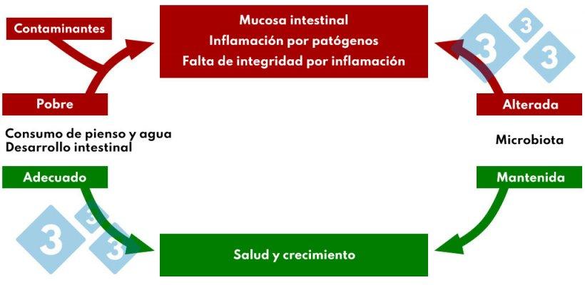 Cuadro 4. Interacción consumo de pienso y agua en la patología intestinal.