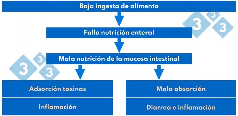 Cuadro 3. Patogenia del síndrome postdestete.