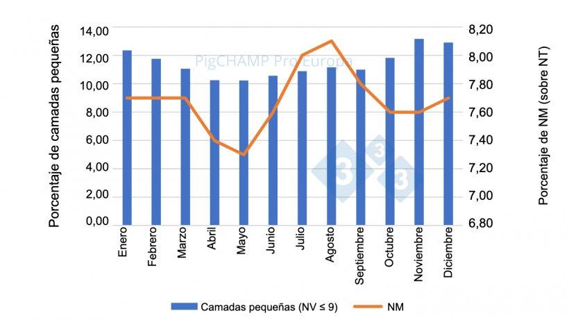 Gráfico 3. Distribución porcentual de lechones NM y de camadas pequeñas (NV≤9 lechones), 2018-2019.