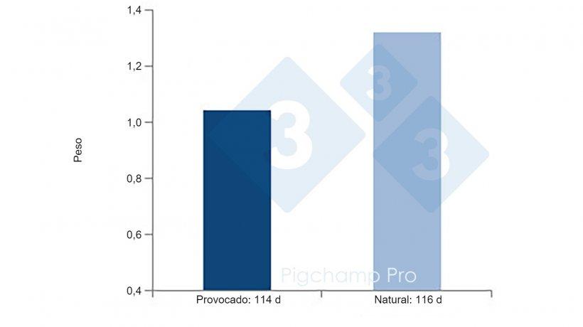 Figura 4: Comparativa peso al nacimiento de partos provocados a los 114 d y partos naturales a los 116 d en cerdas hiperprolíficas(¿Nos están pidiendo las cerdas el 3tres4? 1/2)