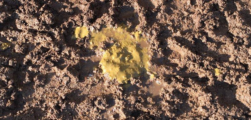 Figura 5. Diarrea amarillo-verdosa.