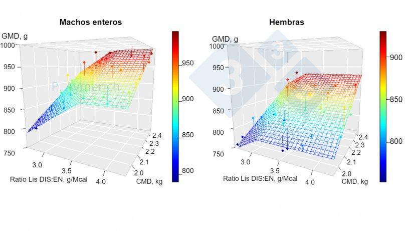 Figura 1. Modelización del efecto de la ratio lisina-energía y el consumo medio diario en machos enteros y hembras entre 70 y 105 kg de peso vivo. GMD=ganancia media diaria, CMD=consumo medio diario. Fuente: Aymerich et al., 2020.