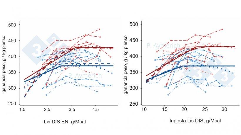 Figura 2. Modelización del efecto de la ratio lisina-energía y la ingestión de lisina diaria en machos enteros (rojo) y hembras (azul) en finalización sobre la eficiencia de conversión (Aymerich et al., 2021).