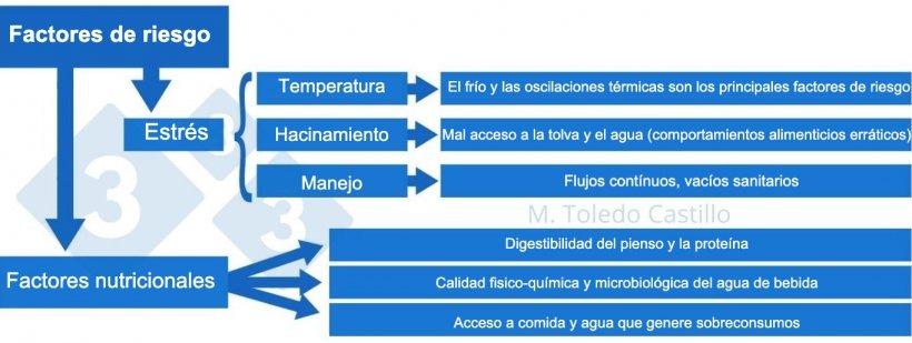 Esquema 2: Cuadro de los factores de riesgo asociados a la presentación de colibacilosis