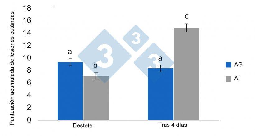 Figura 3. Medias de mínimos cuadrados y errores estándar de la puntuación de lesiones acumuladas en lechones destetados previamente alojados en AG pre-destete (alojamiento grupal) o en AI (alojamiento individual). Las diferencias significativas se indican con letras diferentes (p <0,05) (de Schrey et al., 2019).
