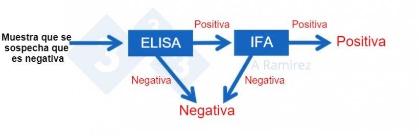 Figura 2. Diagrama que demuestra el uso de PPA IFA como prueba confirmatoria para muestras que salen inesperadamente positivas a PPAmediante ELISA.Una muestra presuntamente negativa que da un resultado negativo en ELISA se considera negativa. Si esta muestra da inesperadamente un resultado positivo, entonces se puede realizar una PPA IFA como prueba confirmatoria. Es decir, si la prueba IFA es positiva, se confirma que la muestra es positiva. Si la prueba de IFA es negativa, asumiremos que fue un falso positivosiempre que la PCR también sea negativa para confirmar que no hay infección reciente.