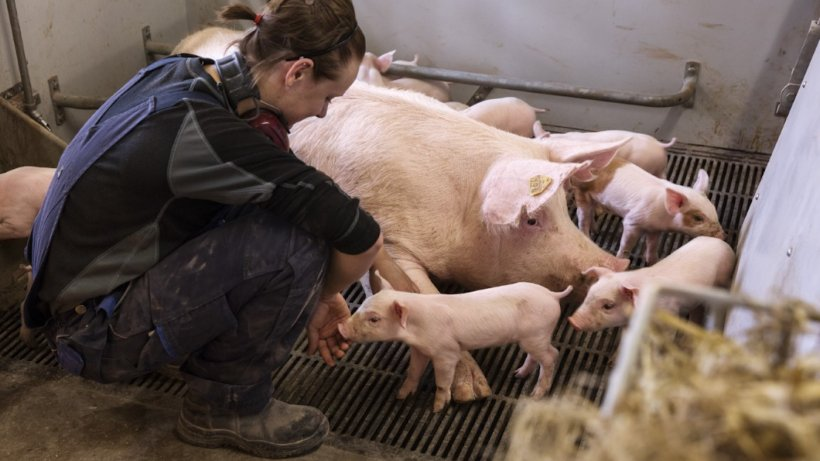 © SEGES Danish Pig Research Centre