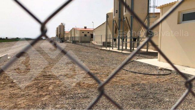 照片1:照片左侧为周边围栏,右侧为生物安全围栏,用于界定建筑物和料塔。两个围栏之间的道路是一个脏区,专门用于卸料。照片由Esther Salvatella提供。