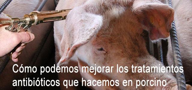 Cómo podemos mejorar los tratamientos antibióticos que hacemos en porcino