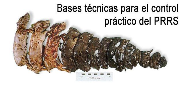 Bases técnicas para el control práctico del PRRS