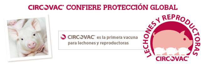 Circovac confiere proteccion total
