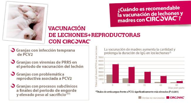 vacunación lechones y reproductoras