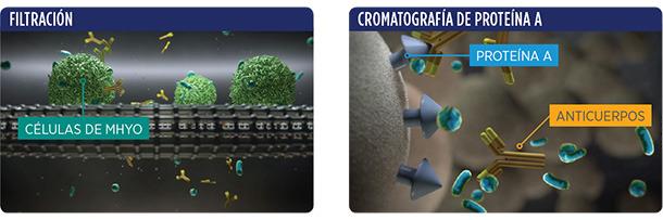 Filtración y cromatografía