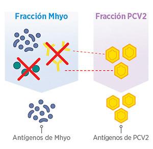 Sin células de Mycoplasma ni anticuerpos