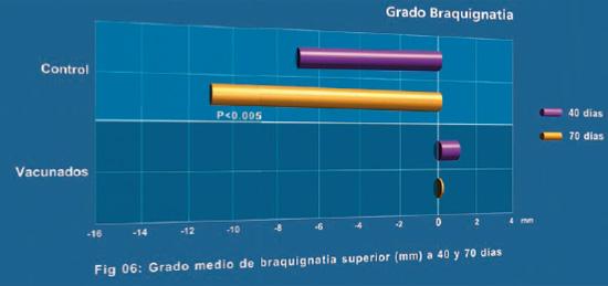 Grado medio de braquignatia superior (mm) a 40 y 70 días
