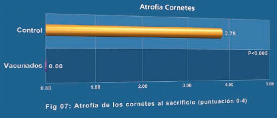 Atrofia de los cornetes al sacrificio (puntuación 0-4)