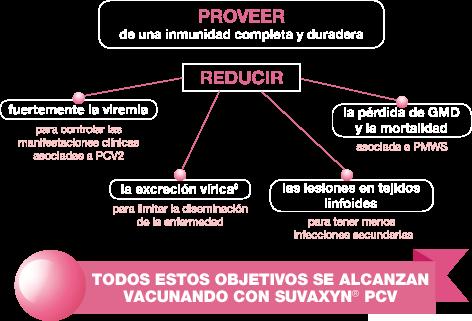 Vacunación contra PCV2