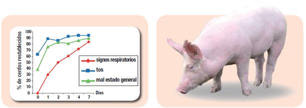 Eficaz contra las principales bacterias responsables de enfermedades respiratorias agudas en el cerdo