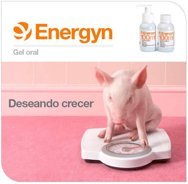 Energyn, deseando crecer