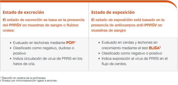 Clasificación de las piaras según el estado del PRRS