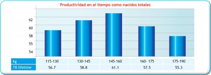 Gráfica 1. Peso a la cubrición (Kg) frente a vida productiva expresada como total de nacidos (TB lifetime)