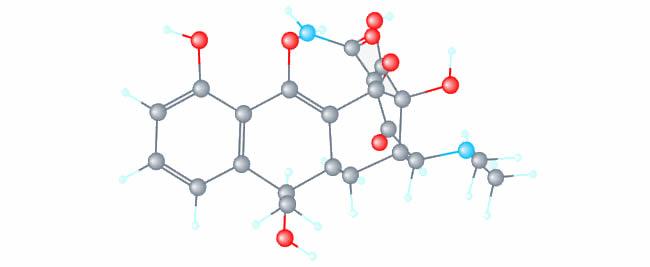 Las tetraciclinas se posicionan como el grupo antibiótico de elección en los programas de control farmacológico de la Leptospirosis