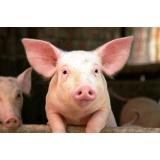 Nu_Porc