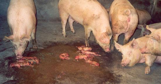 El caso cl nico del mundo abortos 3tres3 la p gina del cerdo - Aborto de 3 meses ...