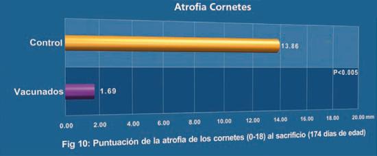 Puntuación de la atrofia de los cornetes (0-18) al sacrificio (174 días de edad)