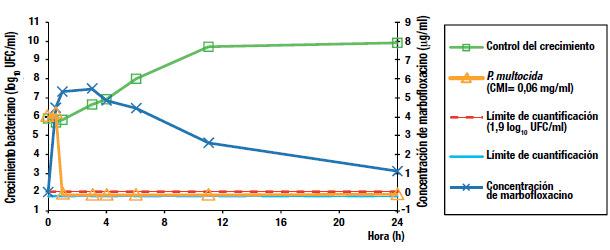 Erradicación de Pasteurella multocida en menos de 1 hora